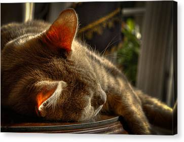 Backlit Ears Canvas Print by David Patterson