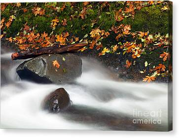 Balance Of The Seasons Canvas Print by Mike  Dawson
