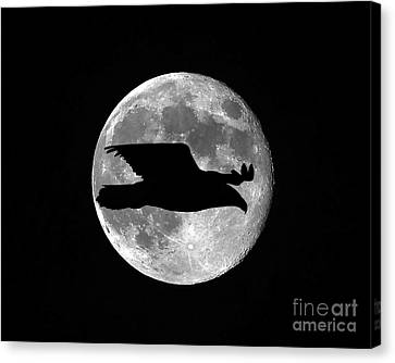 Bald Eagle Moon Canvas Print by Al Powell Photography USA