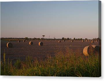Bales In Peanut Field 1 Canvas Print by Douglas Barnett