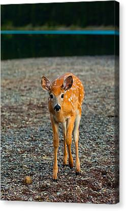 Bambi Canvas Print by Sebastian Musial
