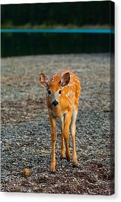 Bambi Canvas Print by Sebastian Musial