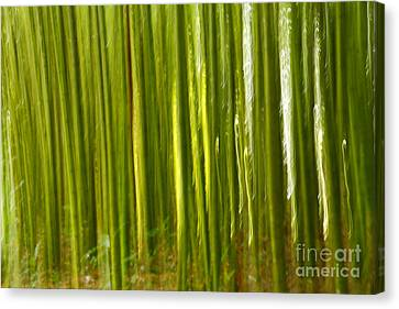 Bamboo Abstract Canvas Print by Gaspar Avila
