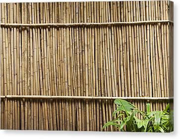 Bamboo Fence Canvas Print by Don Mason