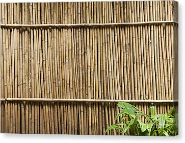 Bamboo Fence Canvas Print by Don Mason