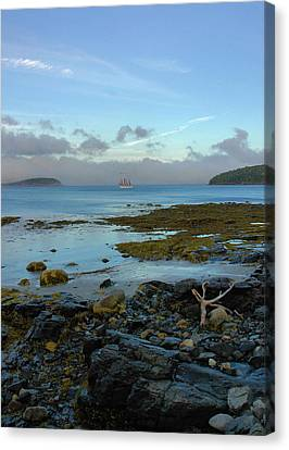 Bar Harbor Evening Canvas Print by Stephen  Vecchiotti
