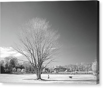 Bare Frozen Tree In Winter Canvas Print by Yaplan