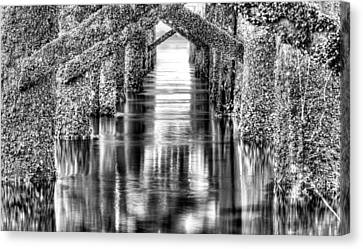 Barnacles  Canvas Print by JC Findley