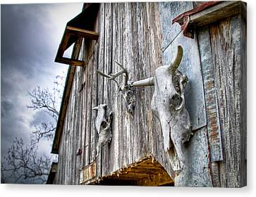 Barnstorm Canvas Print by Pixel Perfect by Michael Moore