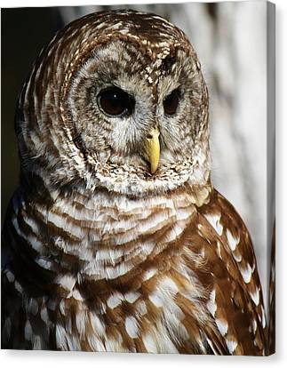 Barred Owl Canvas Print by Paulette Thomas