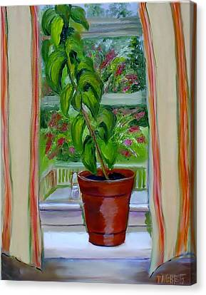 Basil In My Window Canvas Print by Phebe Smith