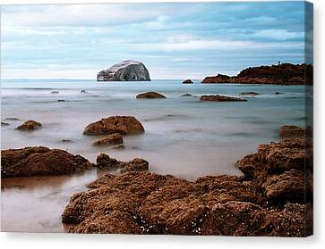 Bass Rock Canvas Print by Amanda Finan