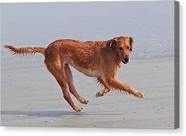 Beach Dog Canvas Print by Kenneth Albin