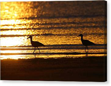 Beach Stone-curlews At Sunset Canvas Print by Bruce J Robinson