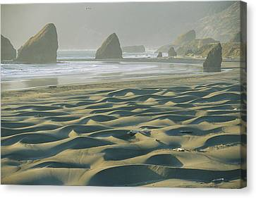 Beach With Dunes And Seastack Rocks Canvas Print by Skip Brown