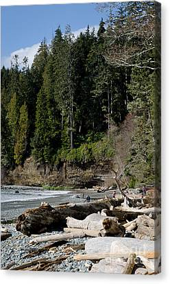 Beached Logs China Beach Vancouver Island Bc Canvas Print by Andy Smy