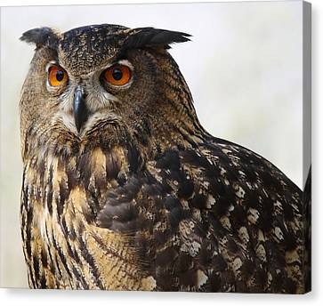Beautiful Owl Canvas Print by Paulette Thomas