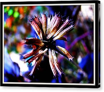 Beauty In Leftovers Canvas Print by Janet Backhaus