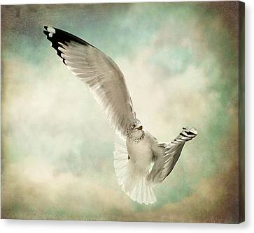 Beauty Of Flight Canvas Print by Jody Trappe Photography