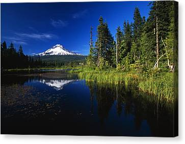 Beaver Dam In Pond, Reflection Of Mount Canvas Print by Natural Selection Craig Tuttle