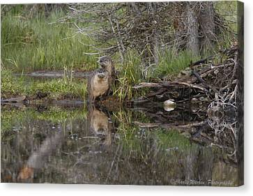Beaver Pair Canvas Print by Charles Warren