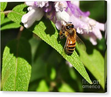 Bee At Work Canvas Print by Kaye Menner