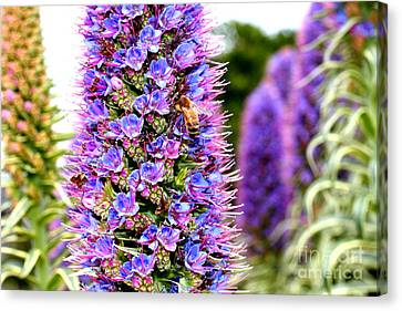 Bee On Purple Pride Of Madeira Flowers . 7d14835 Canvas Print by Wingsdomain Art and Photography