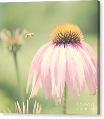 Beeautiful Canvas Print by Kim Fearheiley