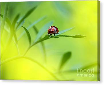 Beetle Butt Canvas Print by Sharon Talson