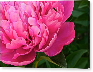 Behold The Beauty Canvas Print by Frozen in Time Fine Art Photography