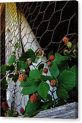 Berries Canvas Print by Jessica Brawley