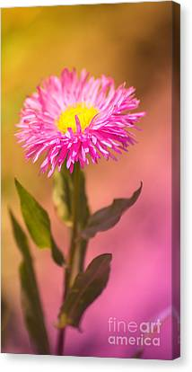 Little Flower Canvas Print by Angela Doelling AD DESIGN Photo and PhotoArt
