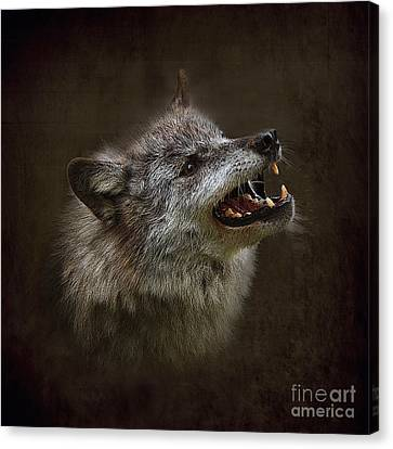 Big Bad Wolf Canvas Print by Louise Heusinkveld