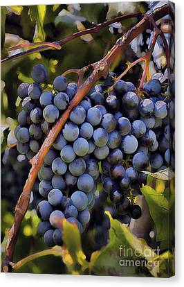 Big Bunch Of Grapes Canvas Print by Michael Flood