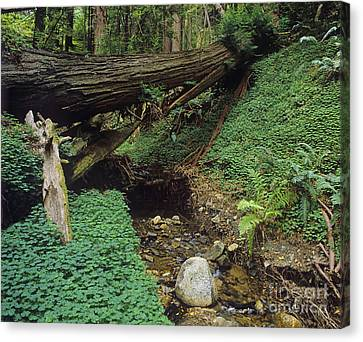 Big-sur-t10-5 Canvas Print by Craig Lovell