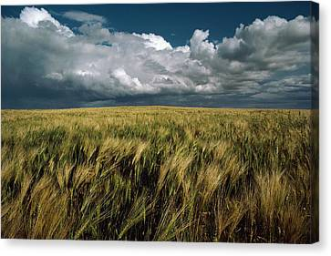 Billowy Clouds Form Over A Wind-swept Canvas Print by Medford Taylor