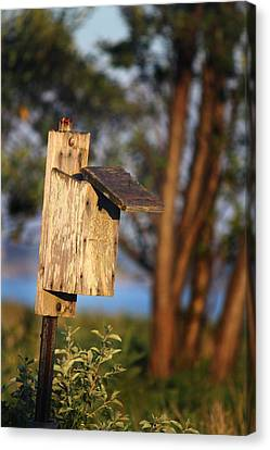 Birdhouse 23 Canvas Print by Andrew Pacheco