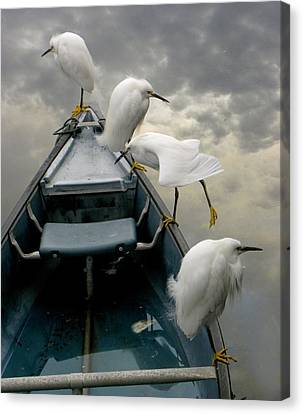 Birds Boat And Beyond Canvas Print by Henry Murray