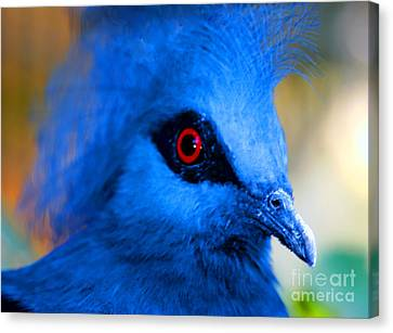 Bird's Eye View Canvas Print by Tap  On Photo