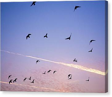 Birds Flying At Sunset Canvas Print by Sarah Palmer