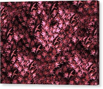 Birds In Redviolet Canvas Print by David Dehner