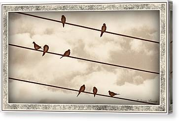 Birds On Wires Canvas Print by Susan Kinney