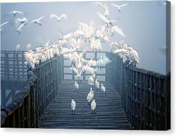 Birds Canvas Print by Zu Sanchez Photography