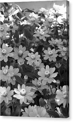 Black And White Flowers Canvas Print by Amy Fose