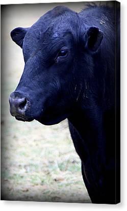 Black Angus Bull - Side Profile Canvas Print by Tam Graff