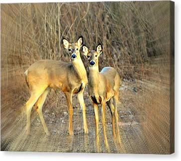 Black Ear Deer Canvas Print by Marty Koch
