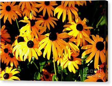 Black Eyed Susans Canvas Print by Theresa Willingham