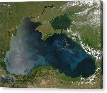 Black Sea Phytoplankton Canvas Print by Nasa