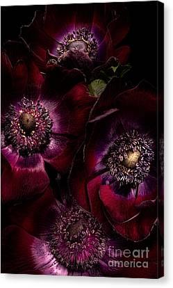Blood Red Anemones Canvas Print by Ann Garrett