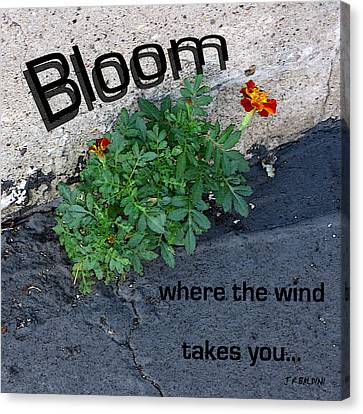 Bloom Where The Wind Takes You Canvas Print by J R Baldini